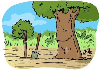 Une association veut planter 73 millions d'arbres en Amazonie !