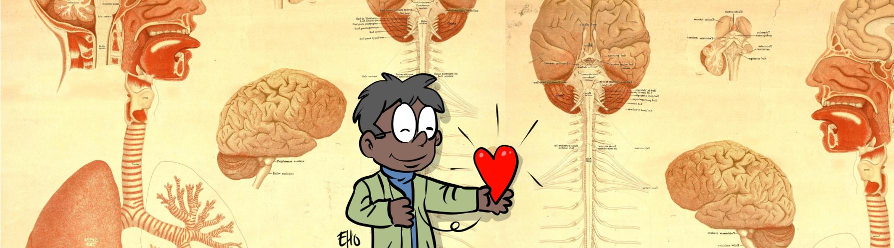 organes